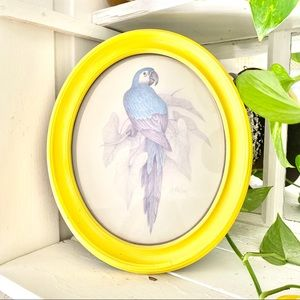 Blue Parrot Bird Upcycled Vintage Drawing Picture